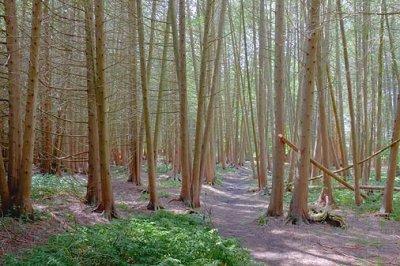 Ken Reid Trail 05988
