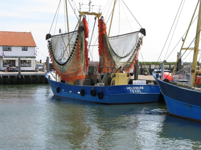 punk in haven Oudeschild