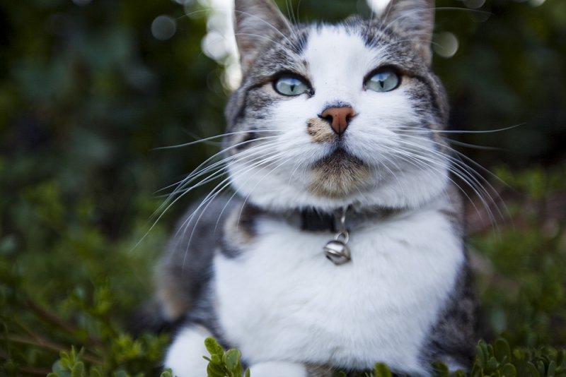Feline guardian of the vineyards, at Martigny.