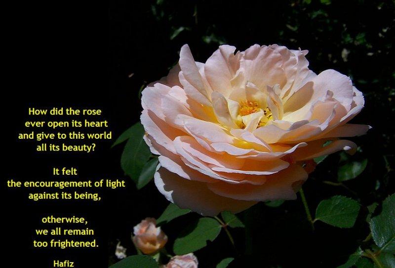 The Encouragement of Light