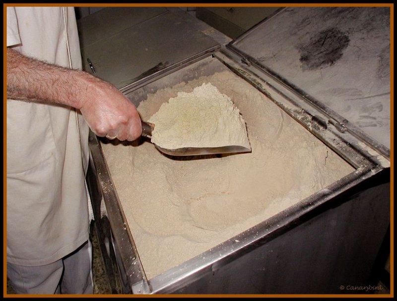 gofio flour