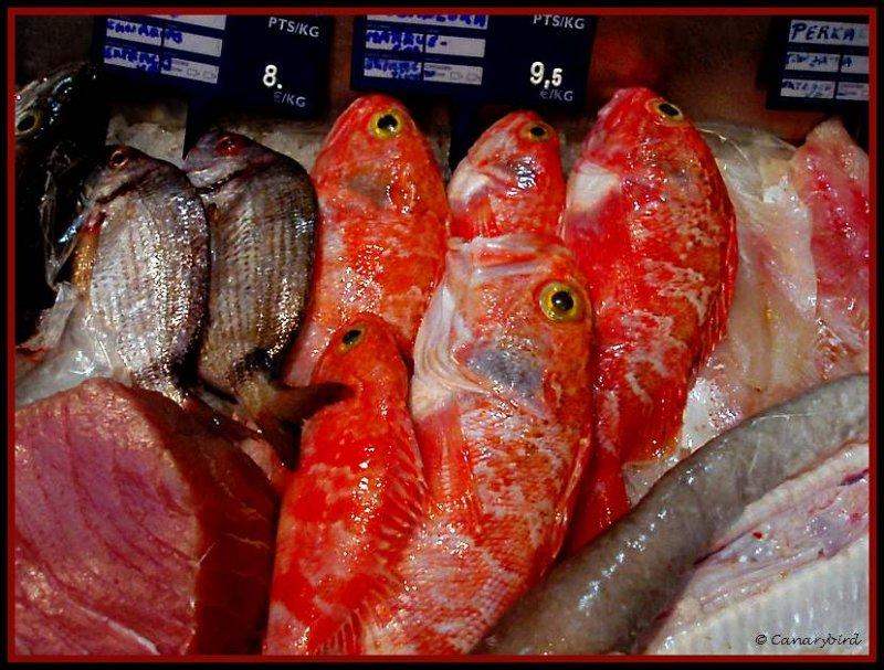 parrot fish, vieja