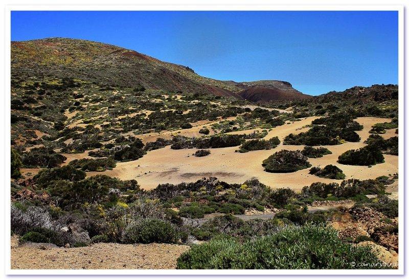 barren sands
