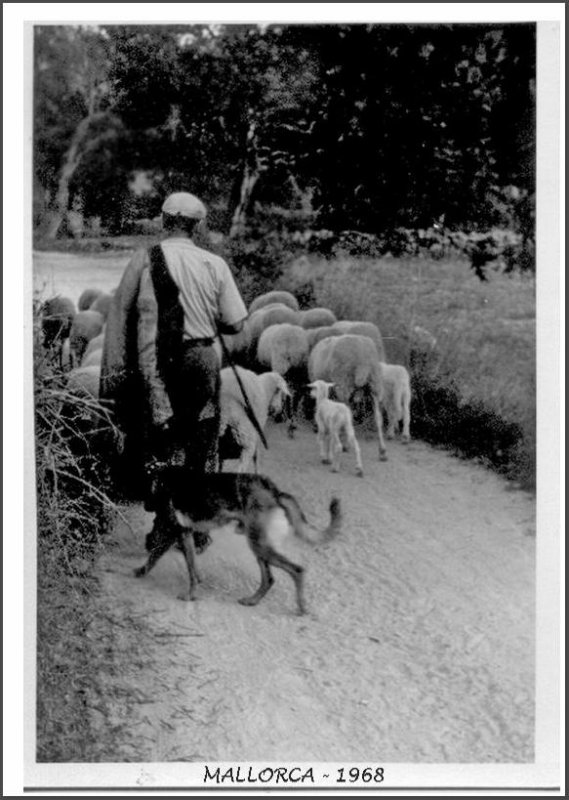 shepherd leaving