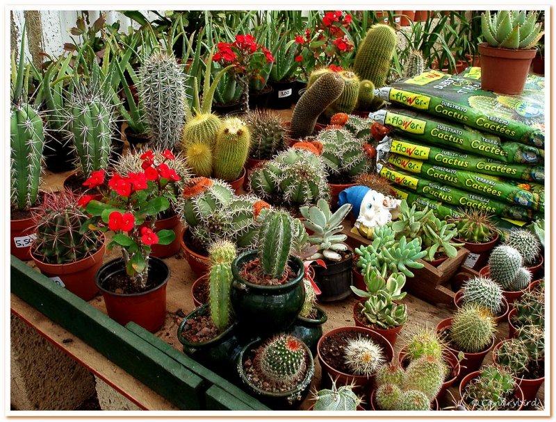 cactii & soil