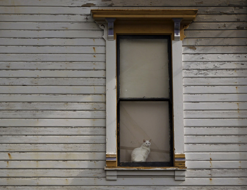 Feline observer, Astoria, Oregon, 2009
