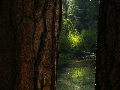 McCloud River, California, 2008