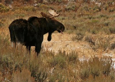 Tongue, Grand Teton National Park, Wyoming, 2008