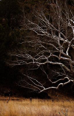 Barren branches, Harshaw, Arizona, 2009