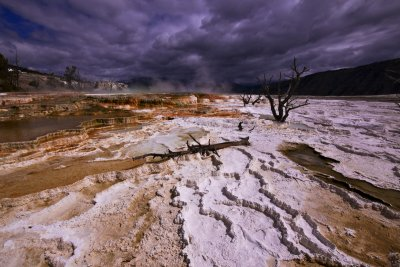 Canary Springs, Yellowstone National Park, 2010