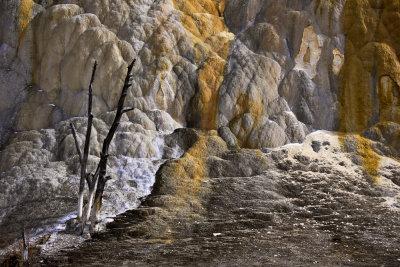 Yellowstone's namesake, Yellowstone National Park, 2010