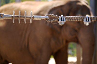 Elephant barrier, San Diego Zoo, California, 2010