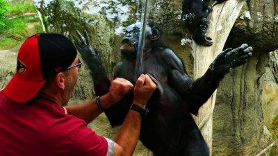 Massage, San Diego Zoo, San Diego, California, 2010