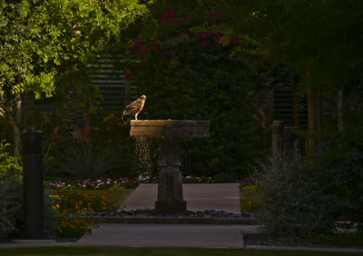 A lasting memory, Phoenix, Arizona, May, 2012