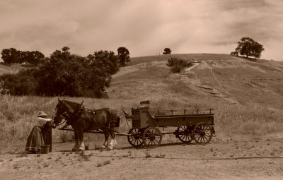 Tending the team, Knights Ferry, California, 2008