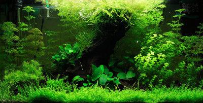 15m l nge aquarium ozean wallpaper aquarium hintergrundbild hintergrundmalerei bunte - Aquarium hintergrund ausdrucken ...