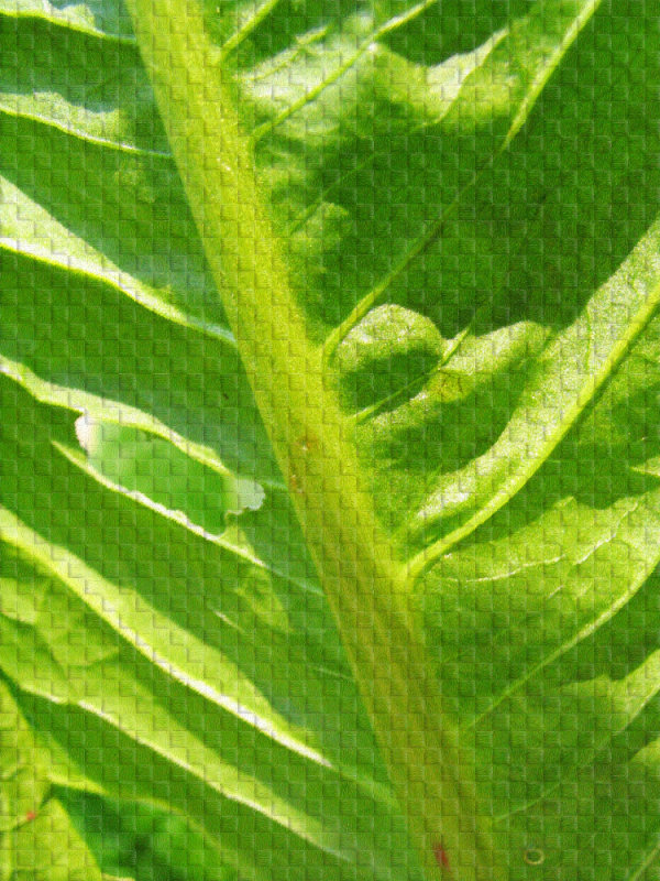 Woven leaf