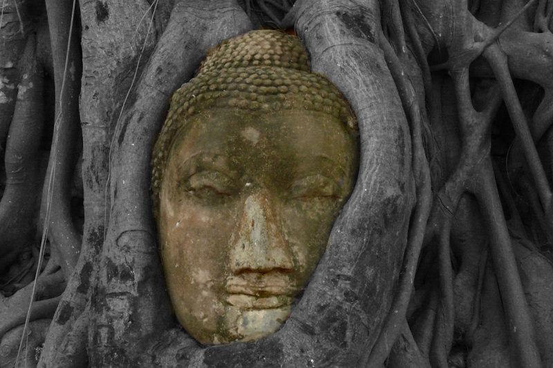 Buddha in tree illu.jpg