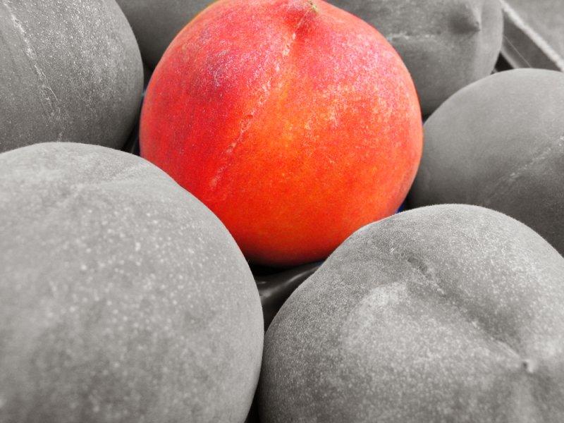 The only fruit web.jpg