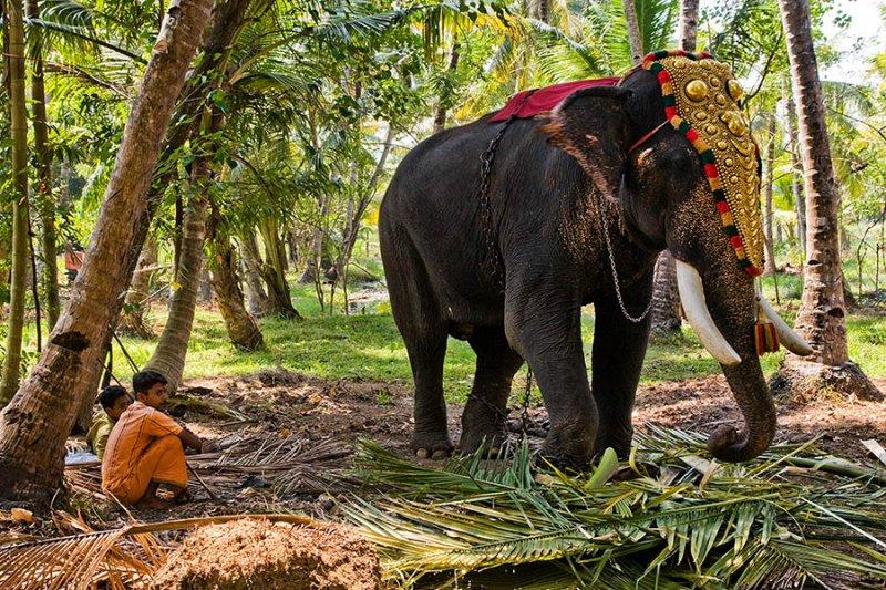 Hindu Festival Elephant, Kollam