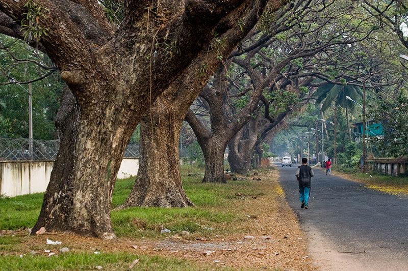 Residential Street, Kochi