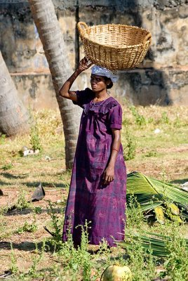 Woman Collecting Coconuts