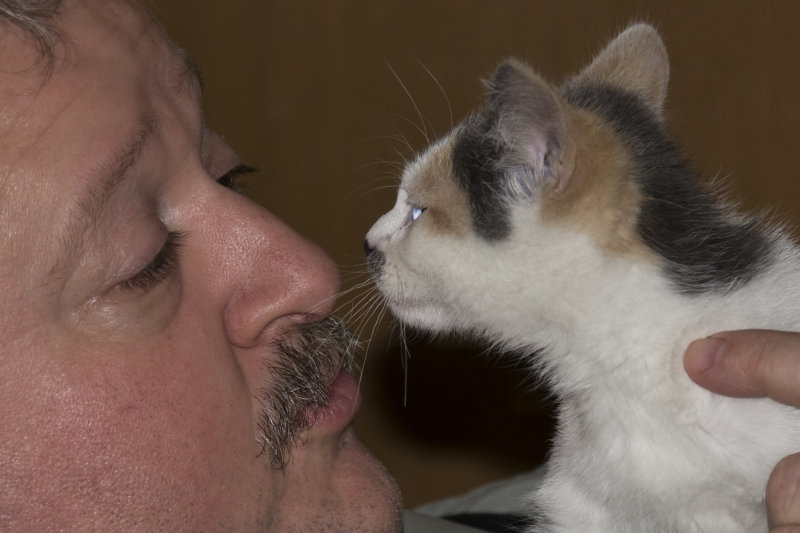 Husband is smitten with the new kitten