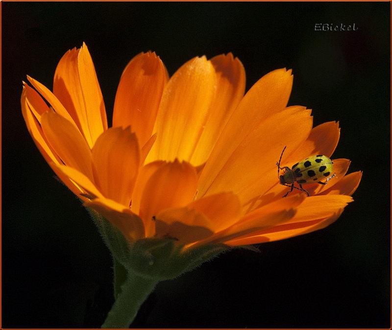 Orange 2012