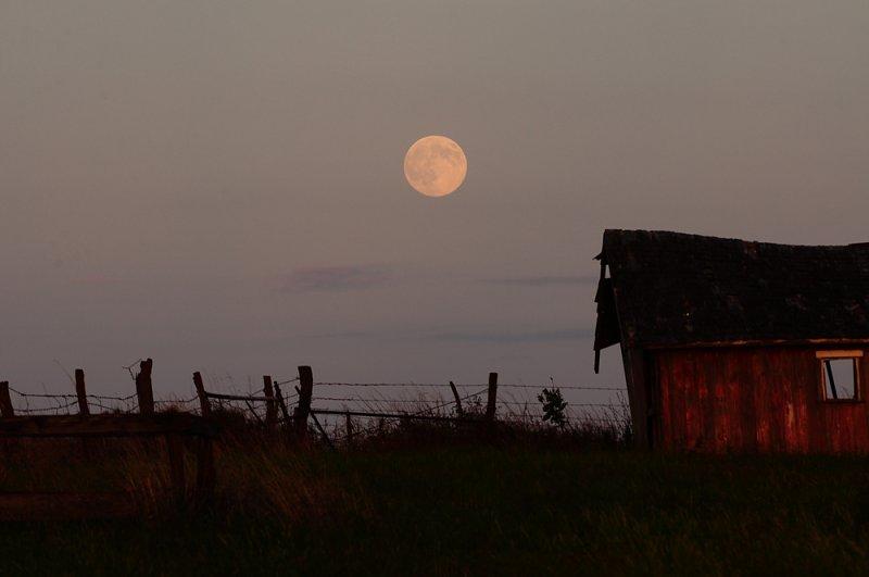 Harvest Moon 2010