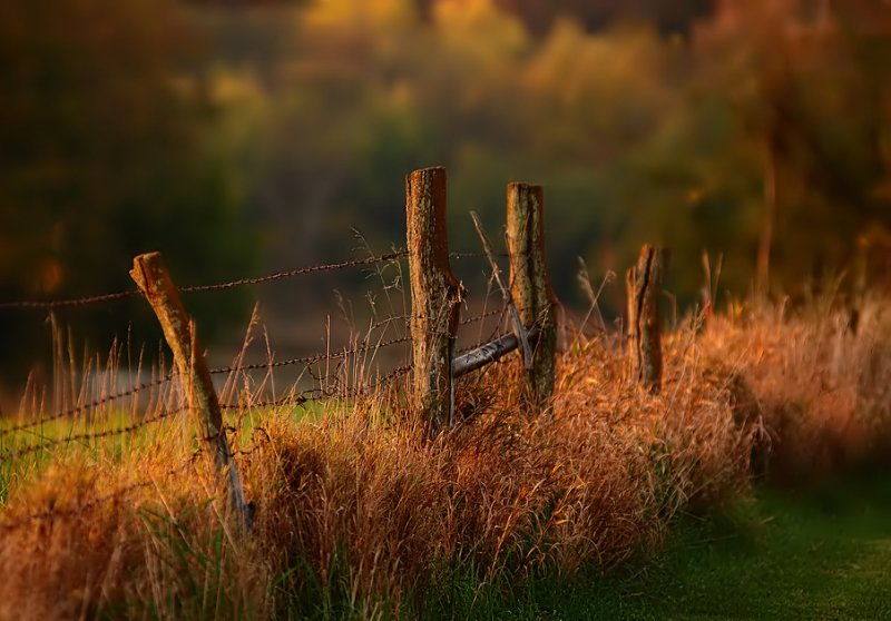 Aging Fence Posts