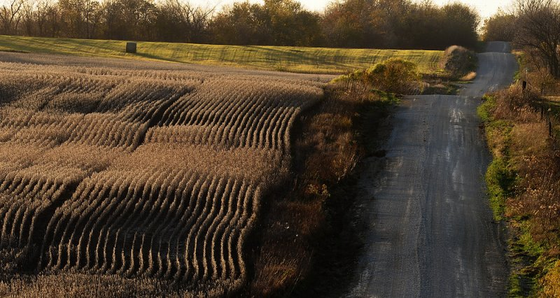Row Crops along Whitton Switch Road