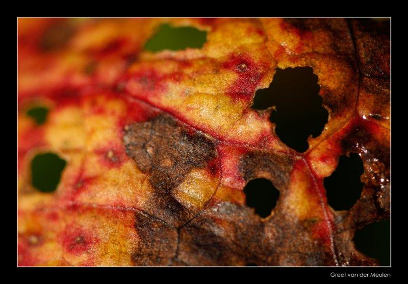 6961 autumn leave detail