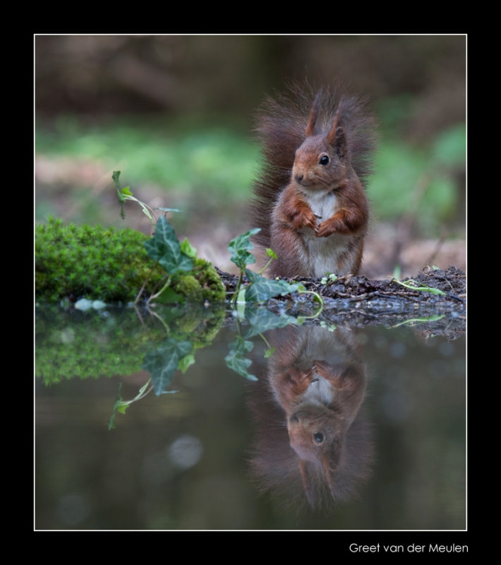 5606 red squirrel in the mirror