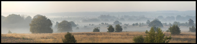 4331 Holterberg early morning mist