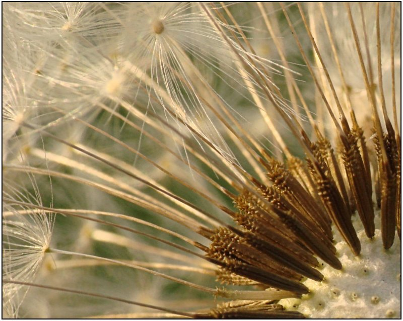 w-2009-09-10-DSC05794.jpg