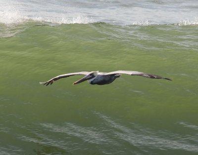 Birds of Pismo Beach