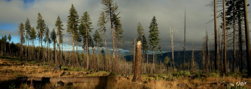 Wildhorse Meadow, Siskiyou National Forest, OR