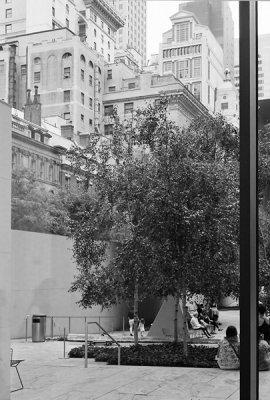 MoMA Garden (from inside)