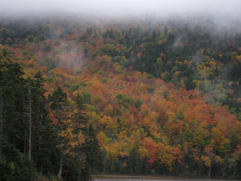 Fall Foliage - Maine or NH