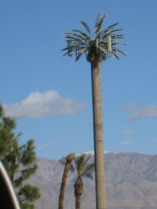 Yep, this is the fake palm tree (radio tower)