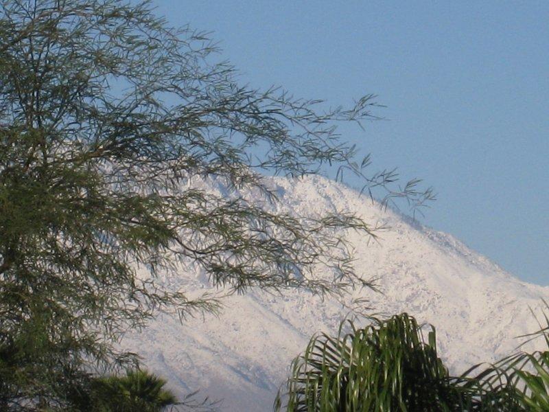 (Backyard in Palm Desert)