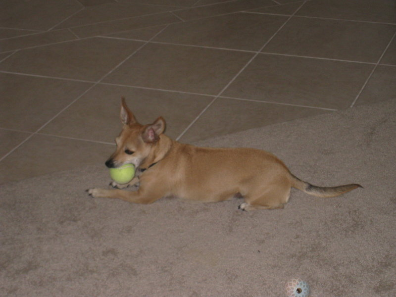 Once I catch a tennis ball I just cant let go!