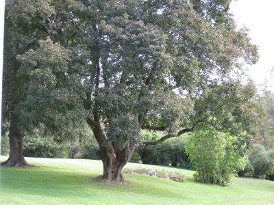 Chesterwod - Outdoor View