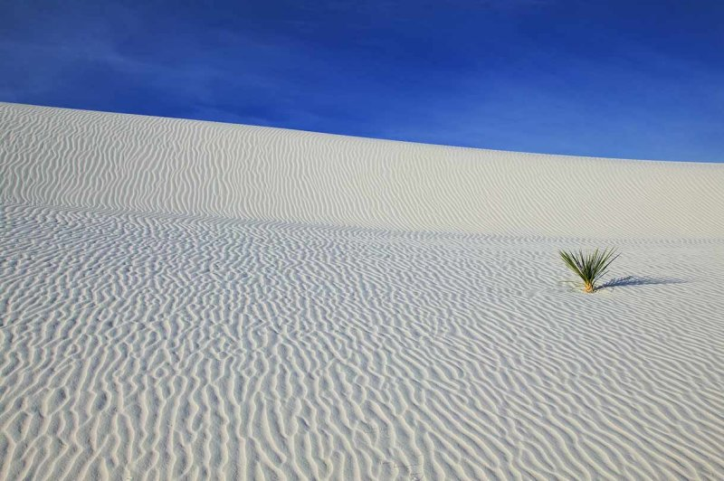 White Sands and Yuca Plant