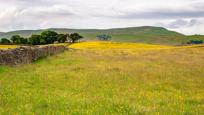 _MG_2245.jpg Buttercup/Wildflower meadow - Hawes - © A Santillo 2008