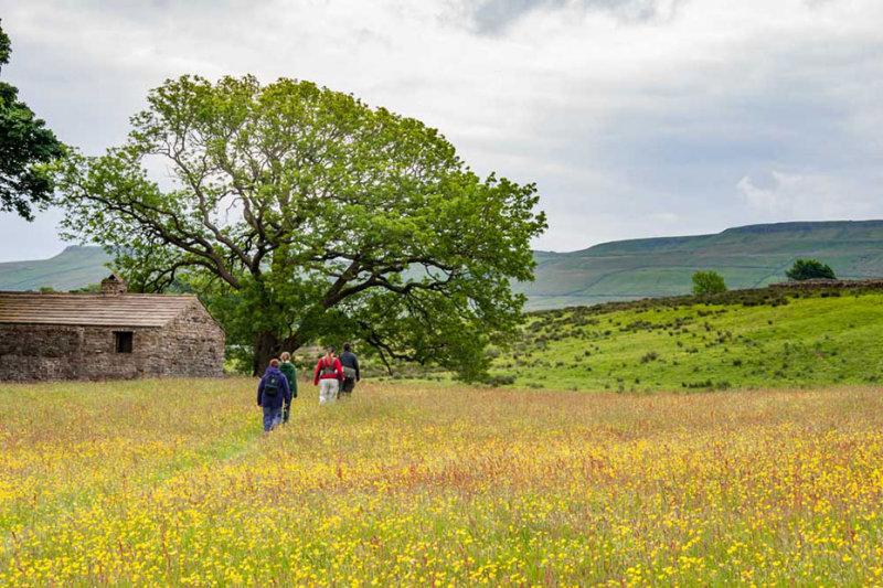 _MG_2248.jpg Buttercup/Wildflower meadow - Hawes - © A Santillo 2008