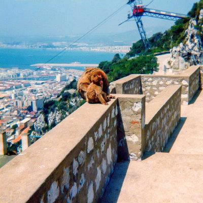 Gibraltar_05.jpg Barbary Apes - Queens Road Gibraltar - © A Santillo 1979