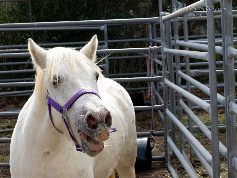 20180421_1_4210026 Horse Says Neigh