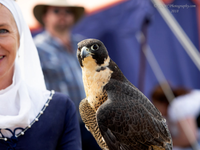 20180421_2_4210677 The Name Is Falcon. No, Not Ford. That Joke Is Old