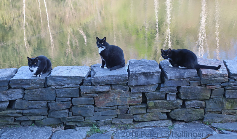 Jimi, Rosie and Rocky